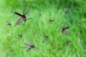 Mosquito, Flea & Tick Control