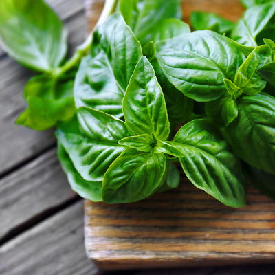 Basil is a natural mosquito repellant and an excellent tool for summer mosquito control here in Lancaster, PA.