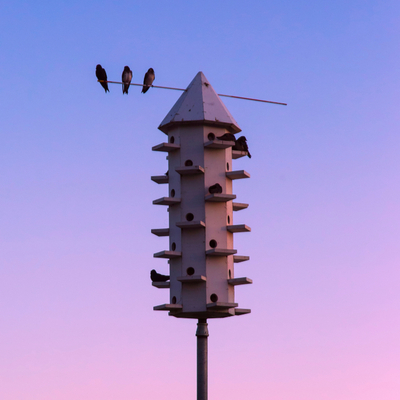 Adding a purple martin house to your Lancaster, PA property is an excellent summer mosquito control technique.