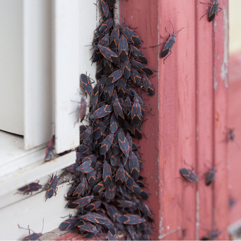 Protect Your Home From Pest This Fall