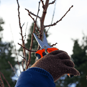 One way to keep fall pests at bay is by trimming tree branches away from your  West Chester, PA home.