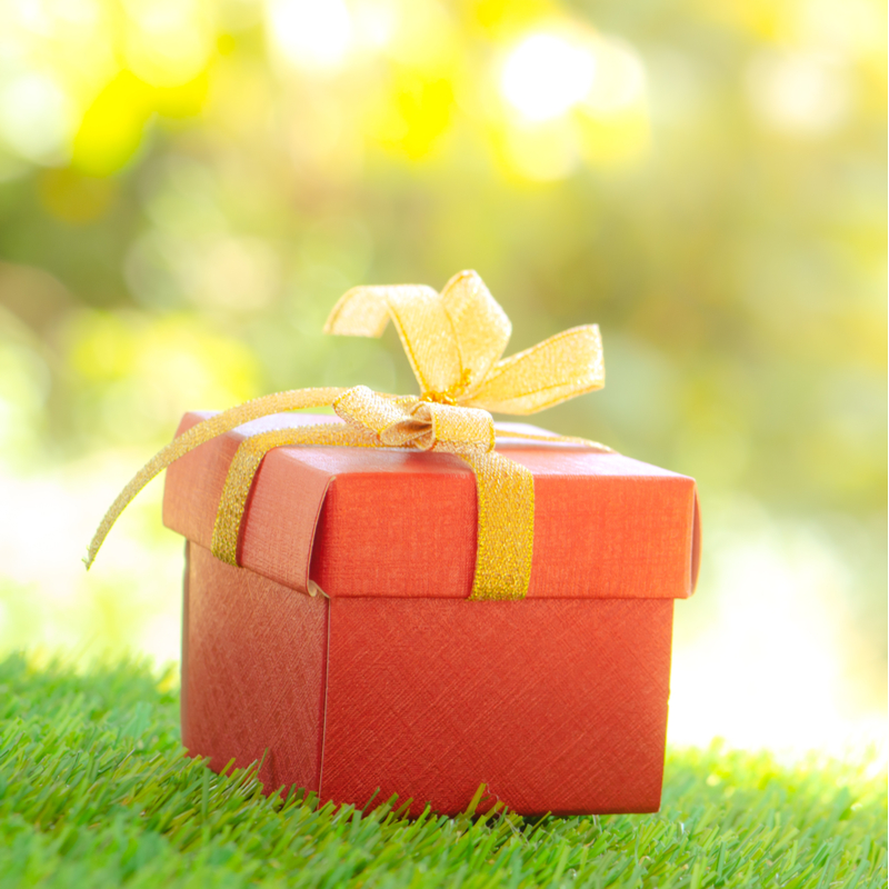 Give the Gift of a Green 2020 With a Lawn Care Program From Showcase Lawn Works