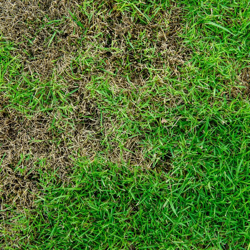Common Lawn Problems in Pennsylvania