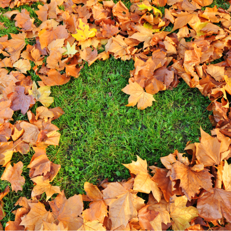 Fall Lawn Care Tips for Your Pennsylvania Lawn