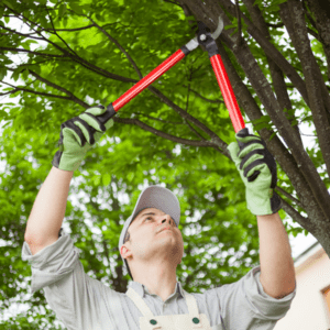 man holding trimmers trimming tree