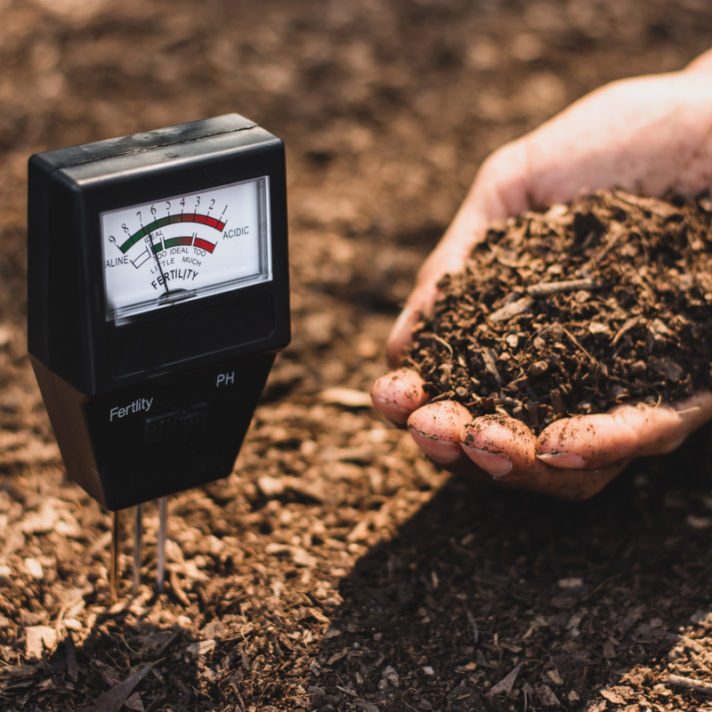 How Your Lawn and Garden Can Benefit From a Soil Test