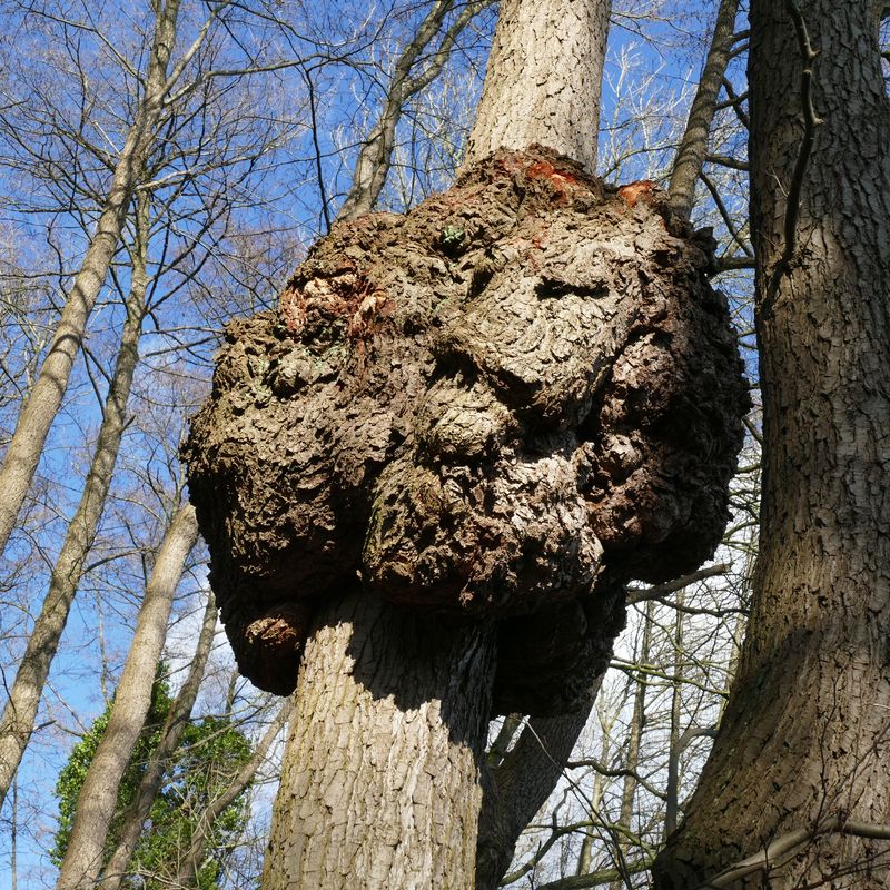 Don't Allow These Pests to Destroy Your Precious Trees